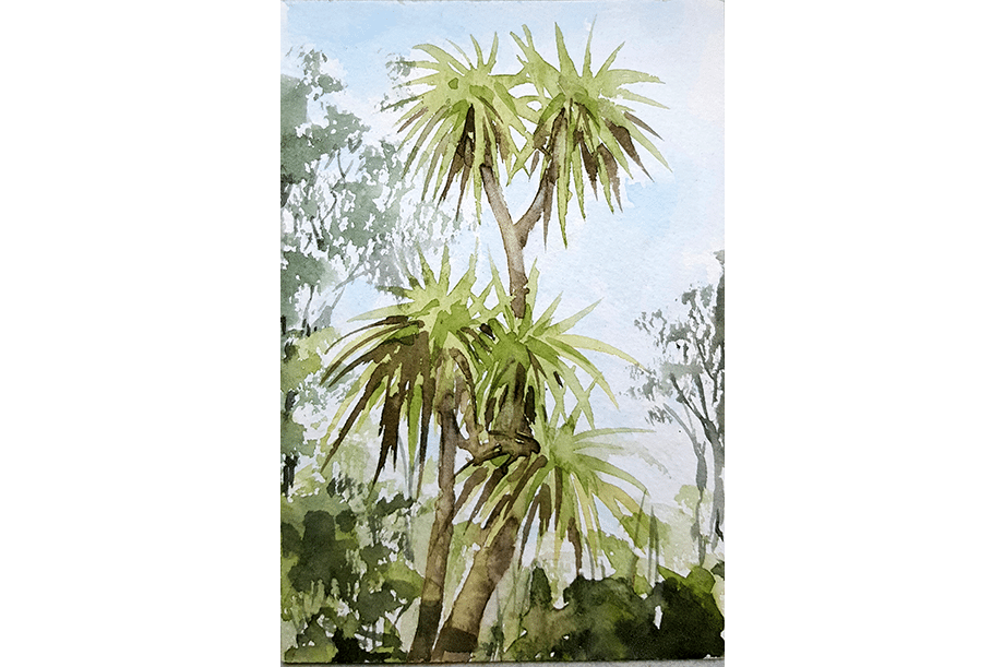 cabbage palms Tunisia